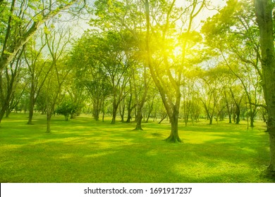 Blurred photo Park forest Green trees Lawn Sunlight through the leaves