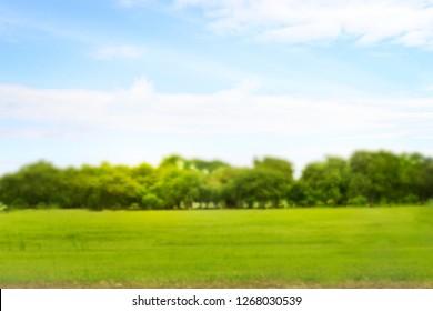 blurred photo public park background. Green tree Morning sun.