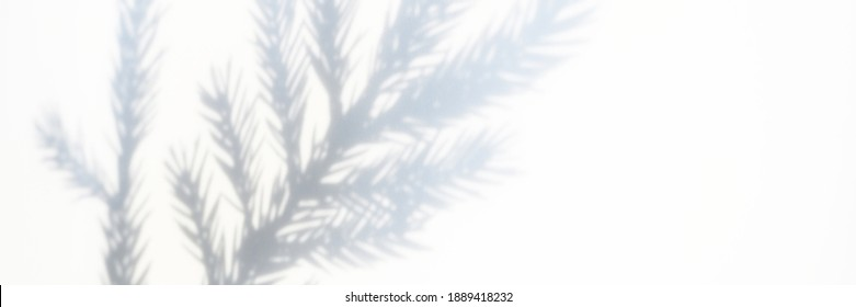 blurred photo of a shadow from a christmas tree branch on a white gray background of a wall or table. falling snow. banner