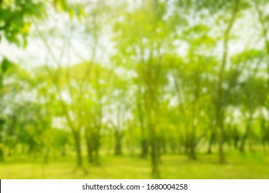 Blurred photo tree green lawn warm sun