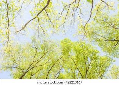 Blurred photo from under shade of tree in green forest, Central Park, New York.