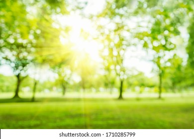 Blurred photos of gardens, forests and trees and green trees that shine under the sunlight.