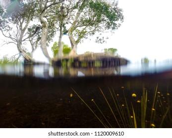Underwater Trees Images, Stock Photos & Vectors   Shutterstock