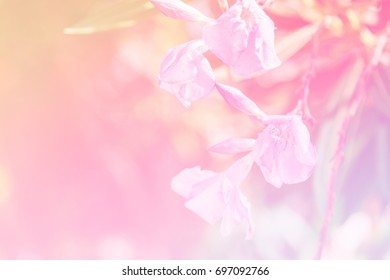 Blurred pink flower soft focus in pastel color for background