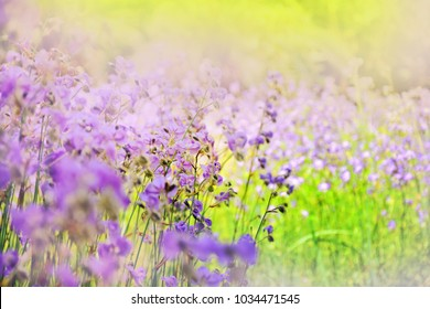 Blurred Purple flowers blooming in nature beautiful landscape