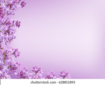 Blurred purple lilac background