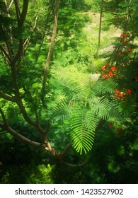 Blurred red and orange of Flame Tree, Royal Poinciana, Flamboyant, Peacock Flower on branch with fresh green leaves on the big tree in rainy season, Top view from rooftop of building, Soft focus