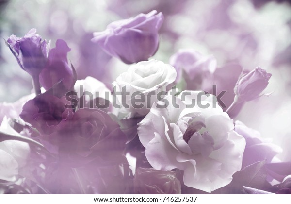 Blurred rose flowers in vintage tone for background