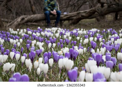 A blurred sad boy sitting on a fallen tree in dark park, many crocus flowers in front of him - he is apathic, dismal, cheerless and homesick.