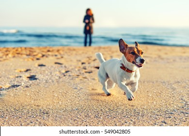 Blurred sea views. Blurred young woman walking a dog breed Jack Russell on the seashore. Pet. Basic background for design