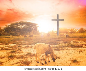 Blurred sheep sheep, field, livestock, animal, flock, farm, farming, herd, lamb, farmland, grass, goat, summer, desert, yellow, evening, forest, sky, wild, hill, sunlight, grazing, graze, agriculture,