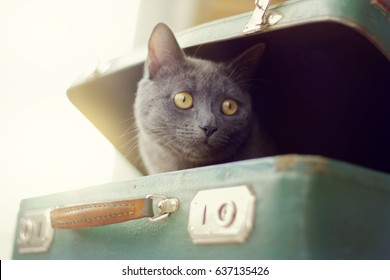 A blurred silhouette of a curious cat peeking out of an old suitcase / game of travel