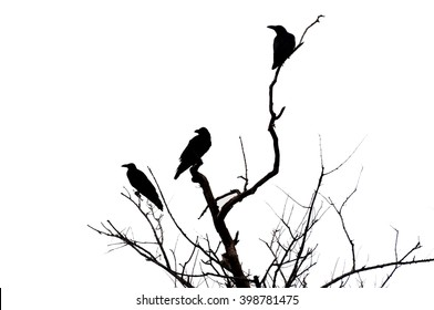 blurred silhouette raven crow on dry tree and white background.