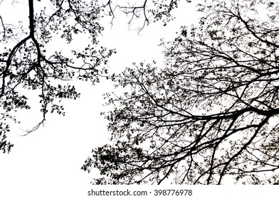 blurred silhouette of trees