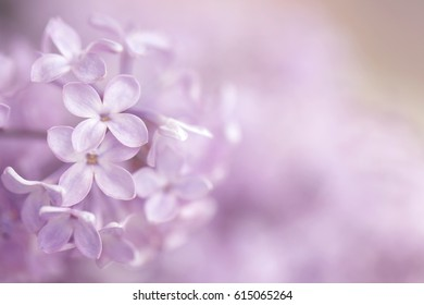 A blurred soft focus horizontal photography image of purple flowers.