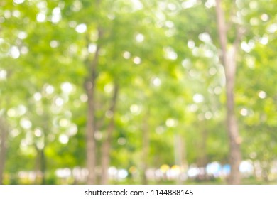 Blurred spring and summer nature outdoor background, Blur green park background
