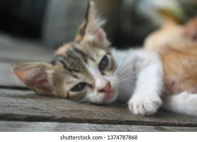 Blurred stray kitten feels sleepy.