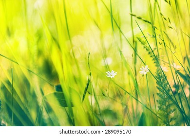 Blurred summer background with green grass and white flowers. Small depth of field