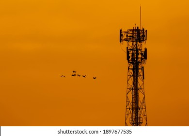 Blurred telecommunication pole and birds flock flying on golden sky of sunset