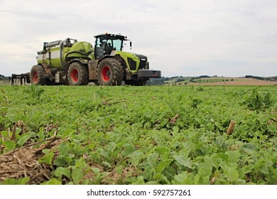 Blurred tractor with slurry tank applicating liquid manure into grown green oilseed rape field. focused on the stubble in the foreground, gray cloudy sky, big agricultural machinery, bio farming