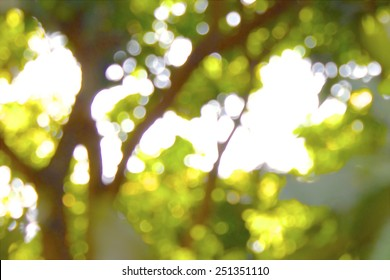 Blurred Tree Background