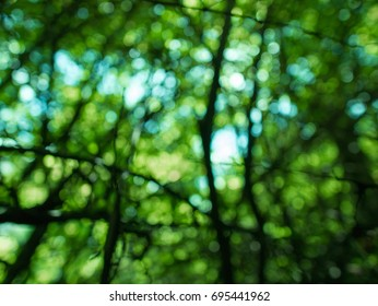 Blurred tree background with bokeh on a sunny day
