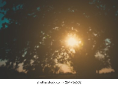 Blurred Tree and Sunlight Background with Retro Instagram Style Filter