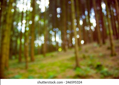 Blurred trees in the forest in the sunny afternoon