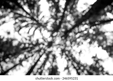 Blurred trees in the sunny afternoon, black&white