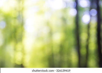 Blurred trees in the sunny day. Forest background