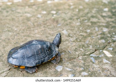 Blurred turtle walking on concrete road