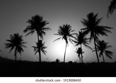 blurred view of coconut trees, silhouette halloween concept, ghostly feel. underexposed.