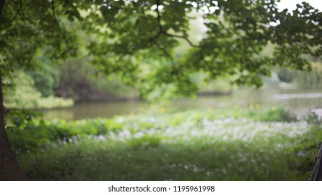 Blurred view of peaceful field and pond in St. James's Park in London