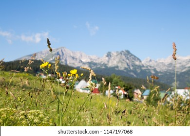 Blurred view of Zabljak town and mountains as seen through wild flowers, Zabljak, Montenegro, 2018