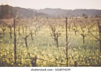 Blurred Vineyard in Spring