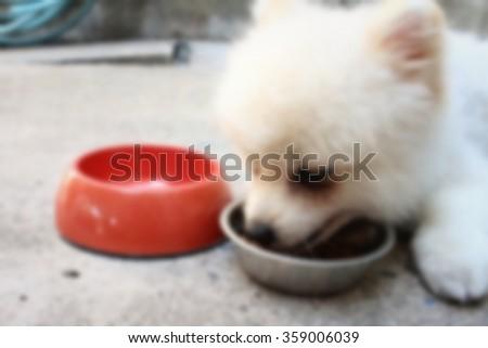 Blurred White Pomeranian Dog Eat Dog Stock Photo Edit Now