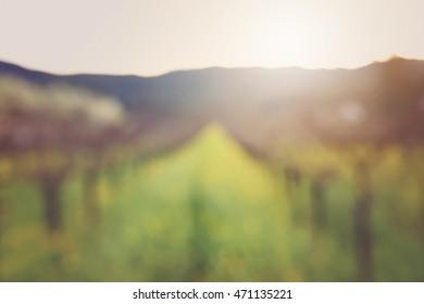 Blurred Wine Vineyard