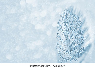 Blurred winter abstract background. Christmas card. Spruce.