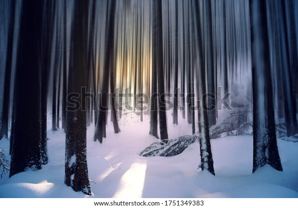 Blurred winter forest with sunset