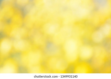 blurred yellow background