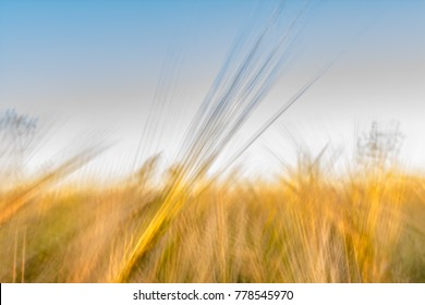 Blurred yellow green abstract background with a predominance of lines based on a grass