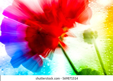 Blurry, abstract shot of red flower on rainy window. Spring time, nature awakening, positive emotions, brights colors all around. Vibrant background, artistic. Paintings, oil colors, acrylic, canvas