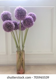 blurry Allium flower in long glass vase, white backgrand