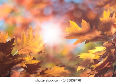Blurry autumn background with a frame of colorful yellow and red oak foliage on a sunny day. Soft focus abstract image with beautiful bokeh and sunlight.