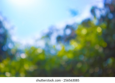 Blurry Bokeh Trees & Sky Background