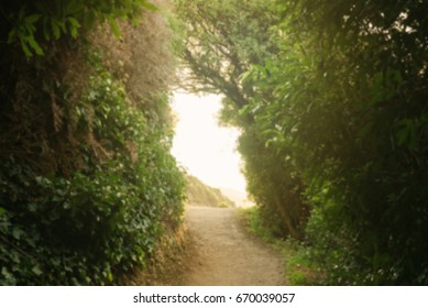 Blurry bright warm green tree foliage tunnel with path at Nugget Point in New Zealand South Island.