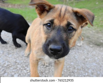 Blurry brown puppy with black face looking at camera.