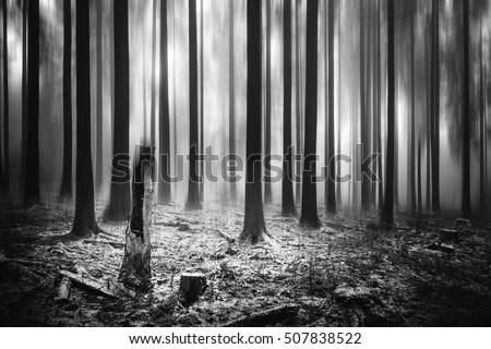 blurry dark winter forest monochrome stock photo edit now