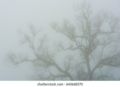 Blurry Dry tree branches silhouette in the mist