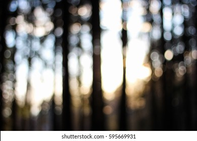 Blurry forest at sunset